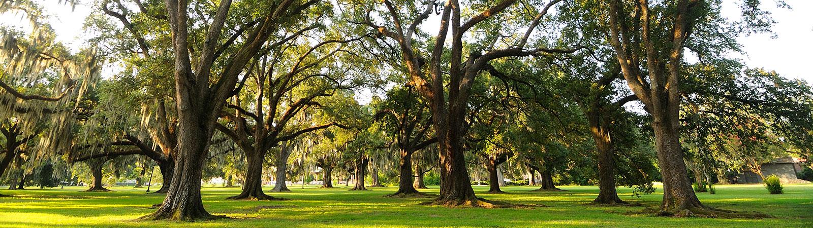 slider-trees